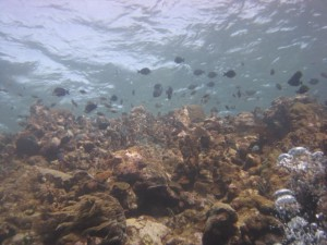 Coral reefs are the ideal place for an Underwater Naturalist to observe and study aquatic life